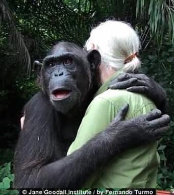 jane goodall de... Jane Goodall Death