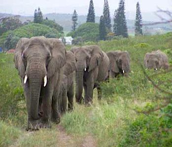 The Elephant Whisperer's herd returns to mourn