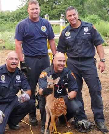 fawn with police rescuers in Suffolk County