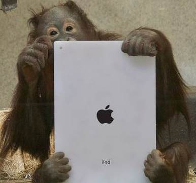 orangutan with iPad Photo by Kotaku