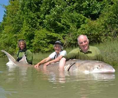 1100-pound sturgeon caught