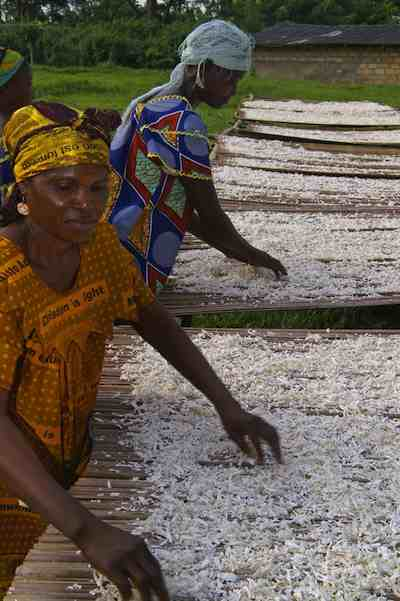 African women drying cassava in DRC
