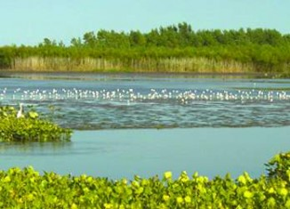 wetland Lake Erie- Photo by Nature Conservancy