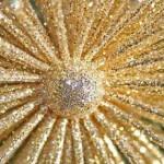 golden-star-decoration