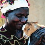 The Heifer Project in Zambia