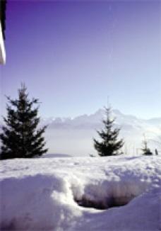 treesinsnow.jpg