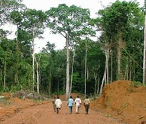 forest Congolese timber protection-ForestPeoplesProgramme