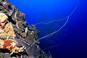 coral-reefs-deep-NOAA