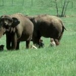 elephantsgraze.jpg