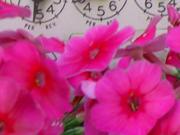 flowers_over_metersm