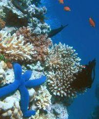reefs.jpg