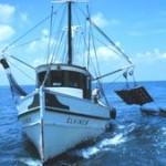 shrimp-trawer