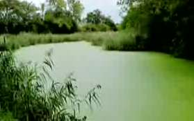 algae-pond.jpg