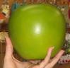 green-apple.jpg