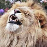 lion-face