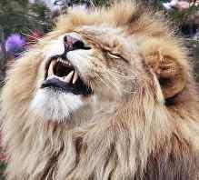 lion-face.jpg