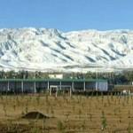 tree saplings planted Turkmenistan