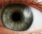 eye-iris