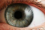eye-iris.jpg