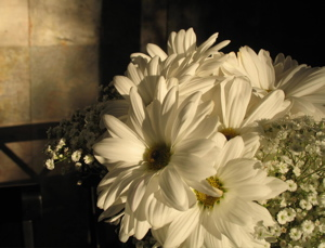 daisies-on-table