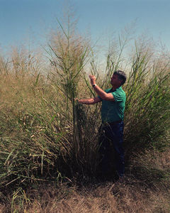 usda-switchgrass