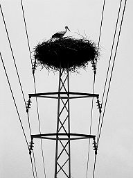 stork-on-voltage.jpg