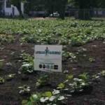 urban-farming-detroit.jpg