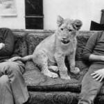 christian-lion.jpg