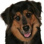 guide dog file photo