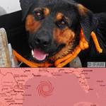 animal-rescue-ike.jpg
