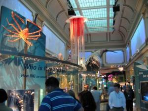 smithsonian-ocean-hall.jpg