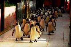 penguin-rescue.jpg