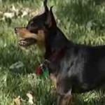 puppy-sniffs-cancer.jpg