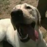 service-dog-soldier