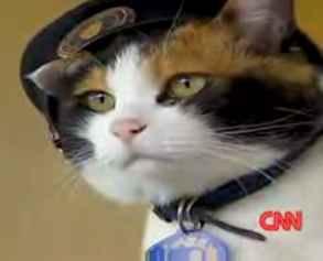 conductor-cat.jpg