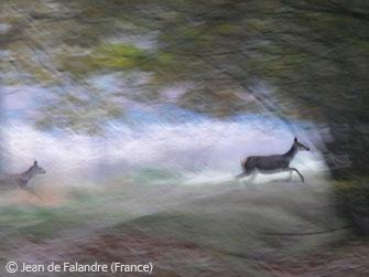 deer-magic-photo-winner.jpg