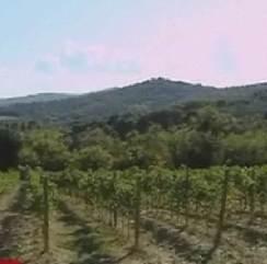 olive-fields.jpg
