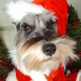 dogster-santa-paws.jpg