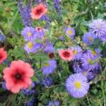 flowers in Stratford