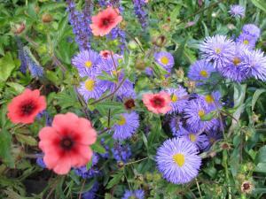 flowers-in-stratford.jpg