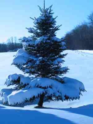 snowy-tree-mequon.jpg