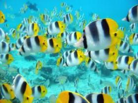 tropical-fish-school.jpg