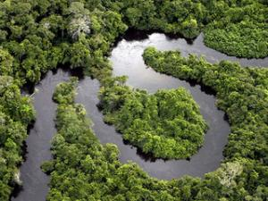 amazon-forest-river