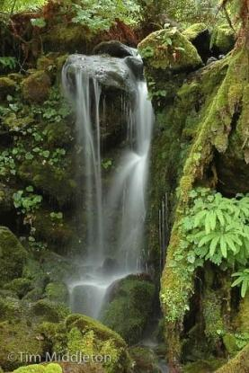 waterfall_ferns.jpg