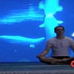 beluga-whale-yoga.jpg