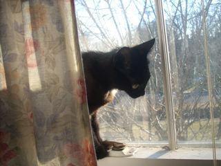 cat-behind-curtain.jpg