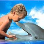 dolphin photo by Sun Star