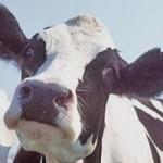 dairycow_usda.jpg