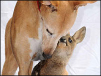 jasmine-dog_deer_.jpg