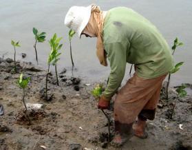 planting-mangroves-ci-photo.jpg